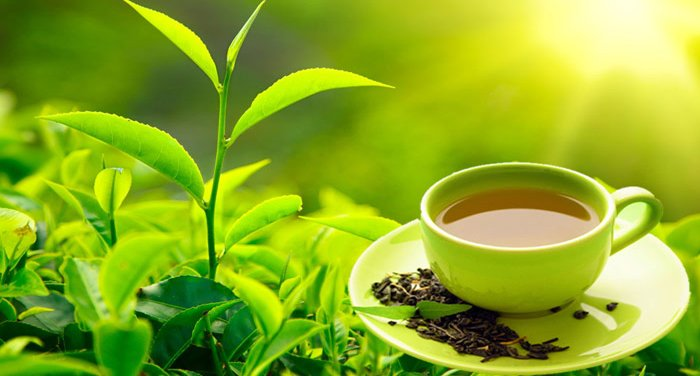 Cách sử dụng sắc ngọc trà Thanh dược